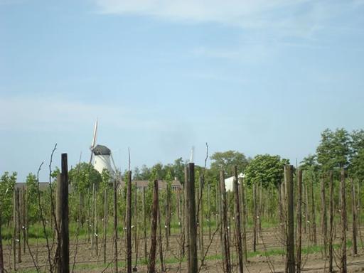Boomgaard met molen op de achtergrond